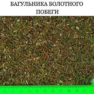 БАГУЛЬНИК