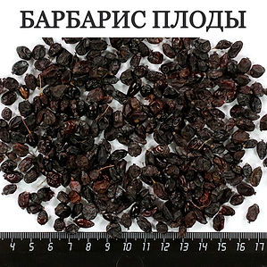 БАРБАРИС ПЛОДЫ