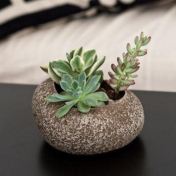 2 succulent.jpg