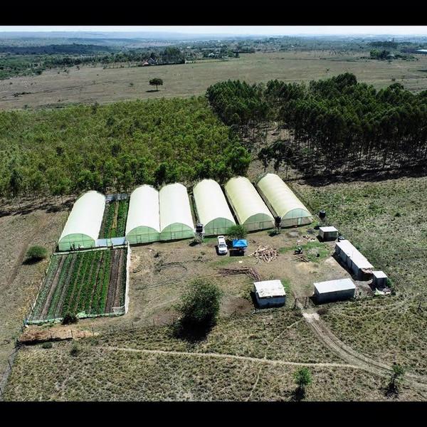 Aerial Shot of Danico Farm