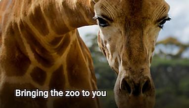 Zoos Victoria.png
