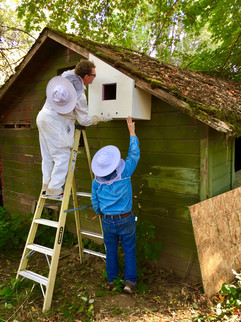 installing box for wild bees