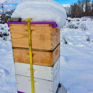 Phoenix Hive in Winter.jpg