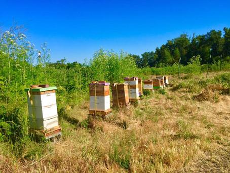 New! Southern Oregon Beekeeping Ordinances