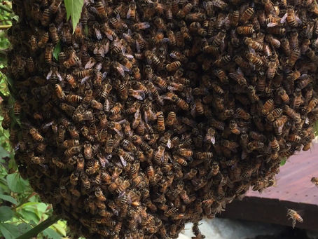Beekeeping Class Online with Cascade Girl and Rogue Community College 2/6/21