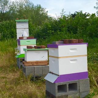 Phoenix Hives Spring.jpg