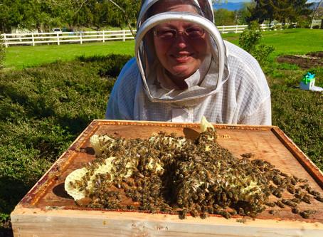 Spring Beekeeping Class at RCC Starts April 4, 2020!