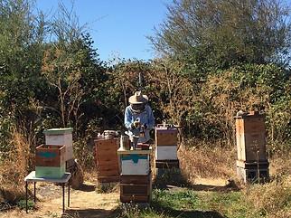 Volunteer Ron Treating Hives