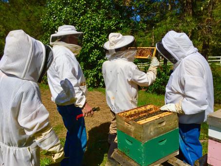 Calling All Veterans; New Beekeeping Class