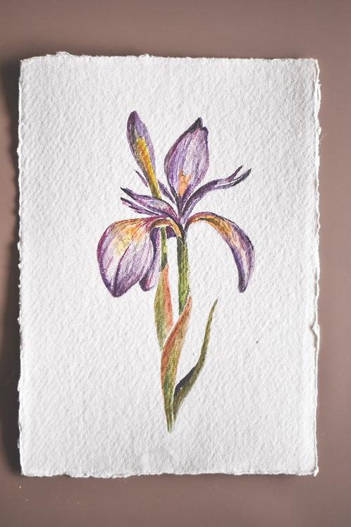 Atelier Maans Original - Iris