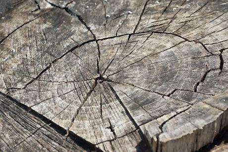 wood-366735_1920.jpg