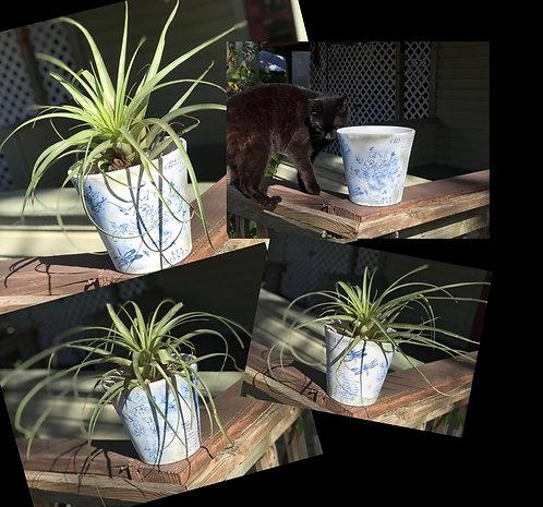 IOD Stamped Flower Pot