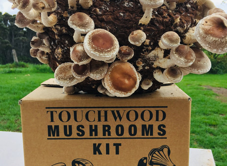 How to grow Oysters and Shiitakes using your Touchwood Mushroom kit