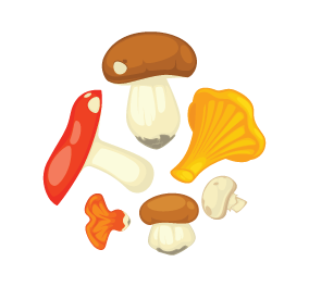 Touchwood Mushrooms - Logo_ (002).png