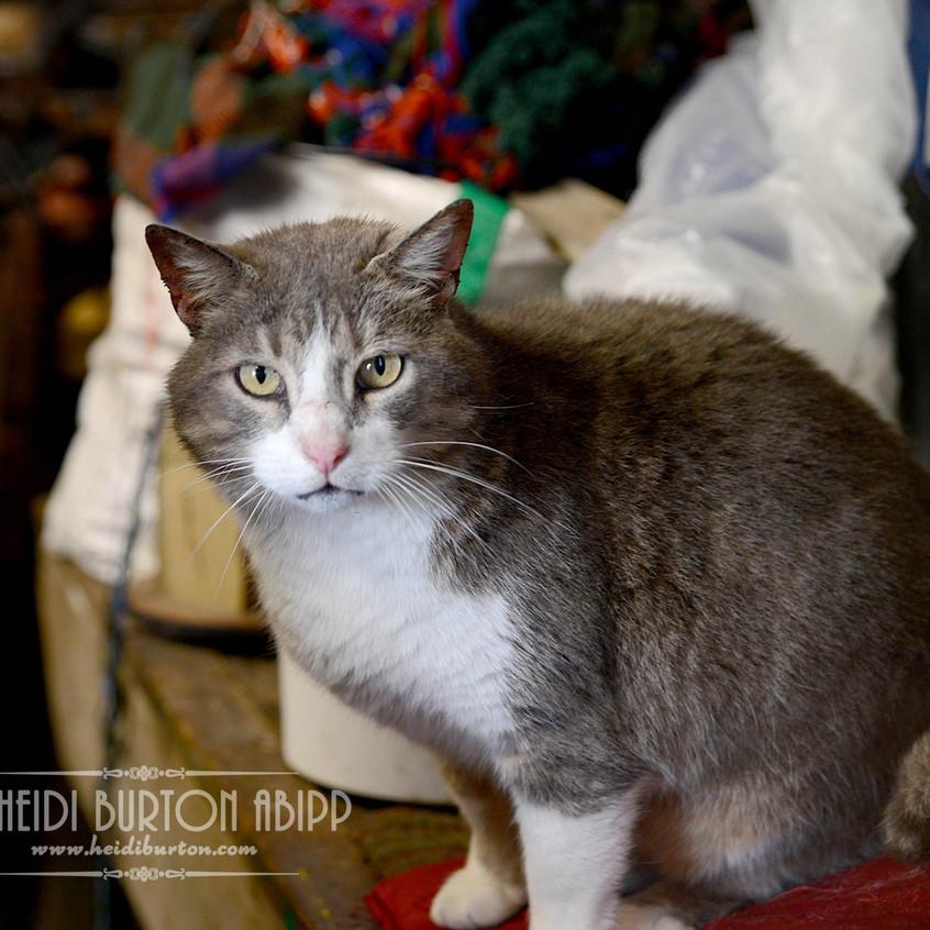 Weavers cat