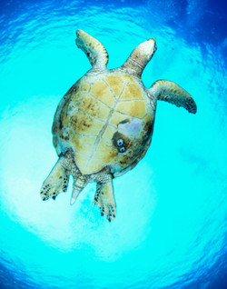 Turtle Underbelly