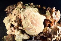 Frog Fish Mugshot