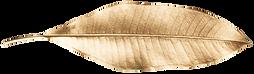 GoldLeaves-2.png
