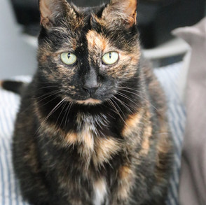 Sassi Cat