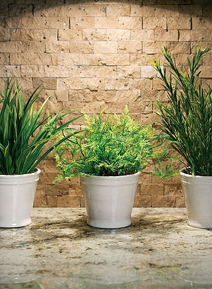 Foliage Potted Plant