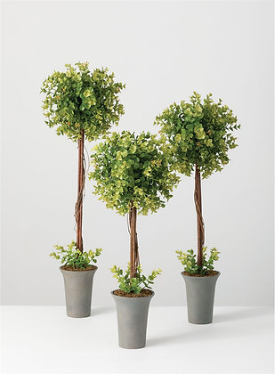 New England Boxwood Topiary