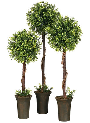 Tealeaf Berry Topiary Trees