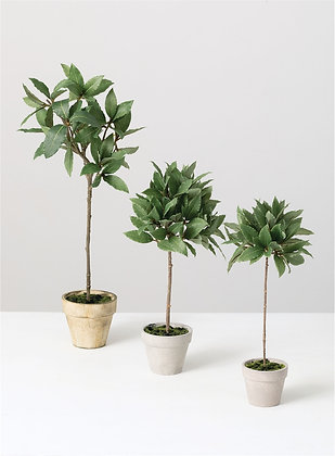 Bay Leaf Topiary Set