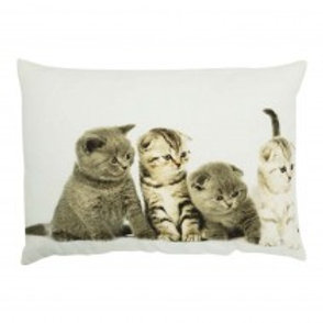 Coussin chatons