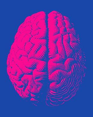 190516 brain.jpg