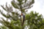 JJ's Tree Removal