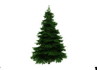 Christmas Tree Pick Up on 1/16/16