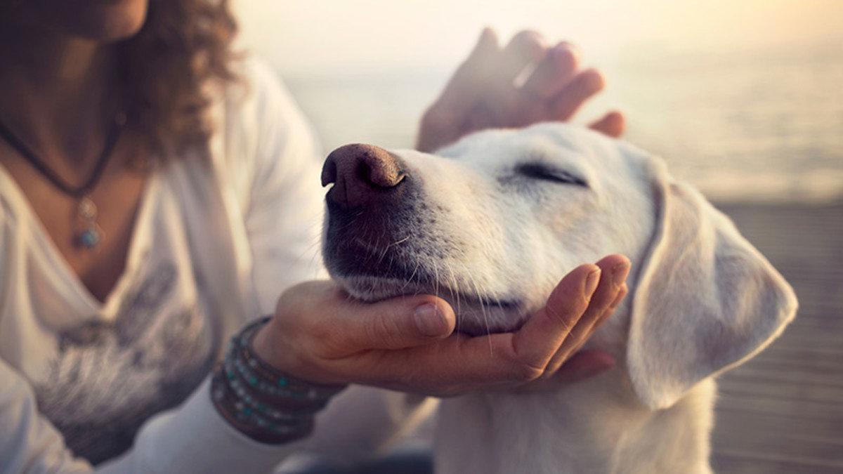 4 Paws Healthy Life Program