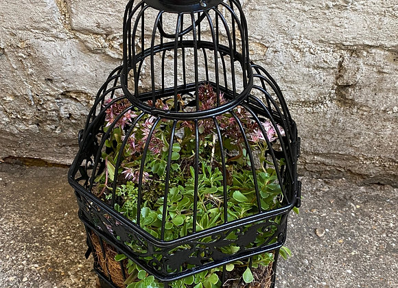 Hanging Cage Planter