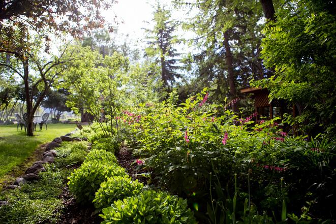 Jacksons Garden-9596.jpg