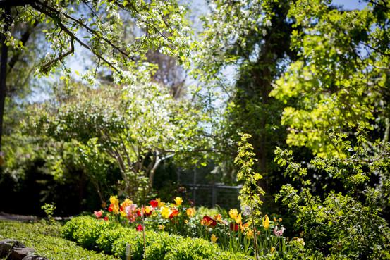 Jacksons Garden-5946.jpg