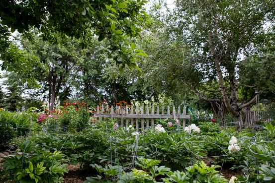 Jacksons Garden-1963.jpg