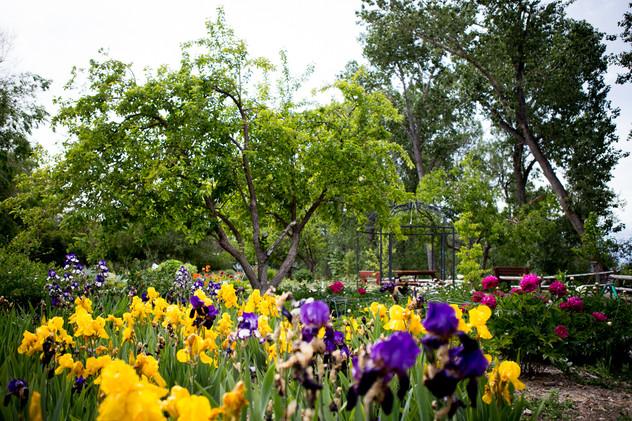 Jacksons Garden-0291.jpg