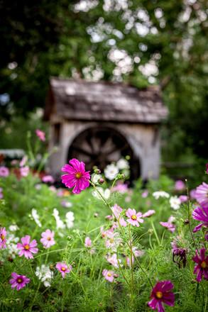 Jacksons Garden Montana-6648.jpg
