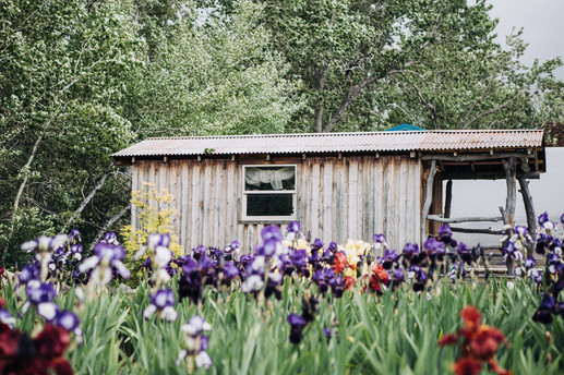 Jacksons Garden-9801.jpg