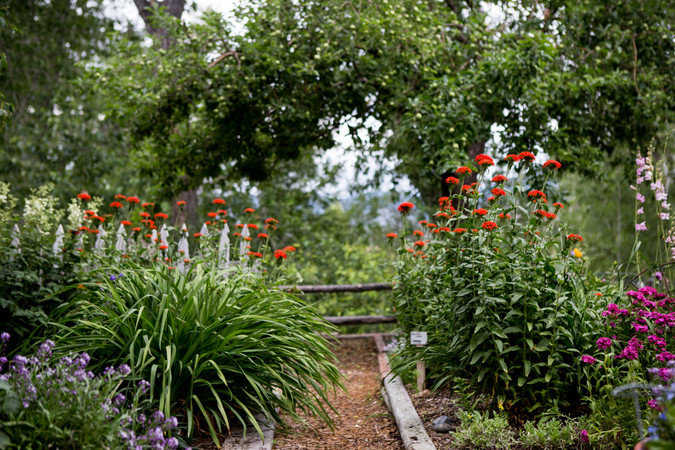 Jacksons Garden-2036.jpg