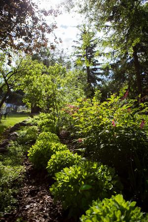 Jacksons Garden-9599.jpg