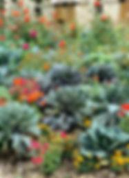 potager-fleuri.jpg