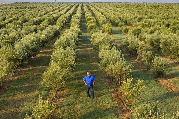 Spotlight: Texas Olive Ranch