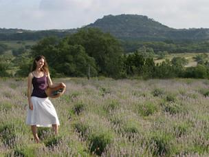 Spotlight: Hill Country Lavender