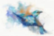 colibri blanchi_edited.png