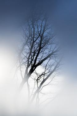 Tree in hiding
