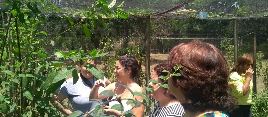 Projeto de Farmácia Viva da UniFAJ é referência na região