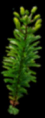 143f897ad646a90ba857b3bf9ea80d65_plants-