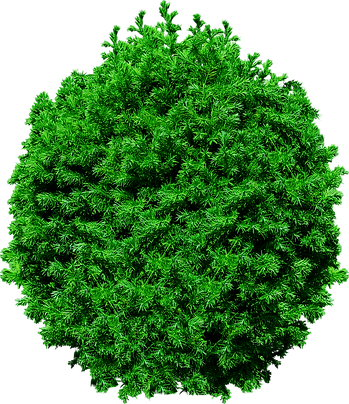 tree-top-view-pine-tree-png-5.png