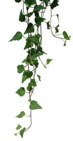 transparent-vines-png-8.png